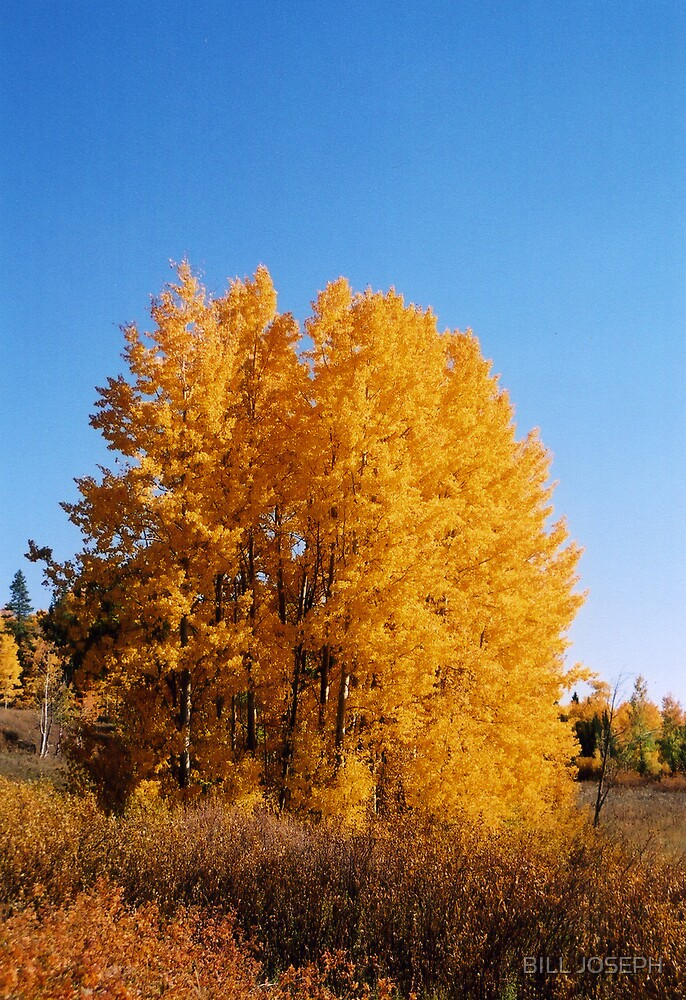 NATURES GOLD by BILL JOSEPH