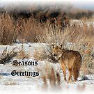 Coyote Christmas by Gene Praag