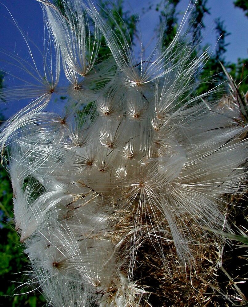 Thistle Flower by giselle