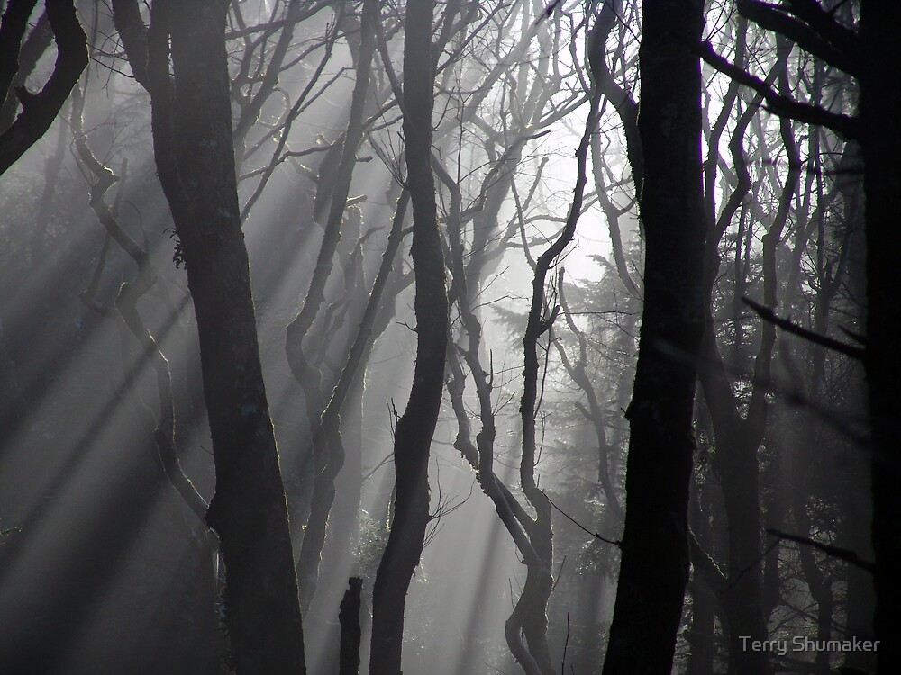 The Woods, Dark and Deep by Terry Shumaker