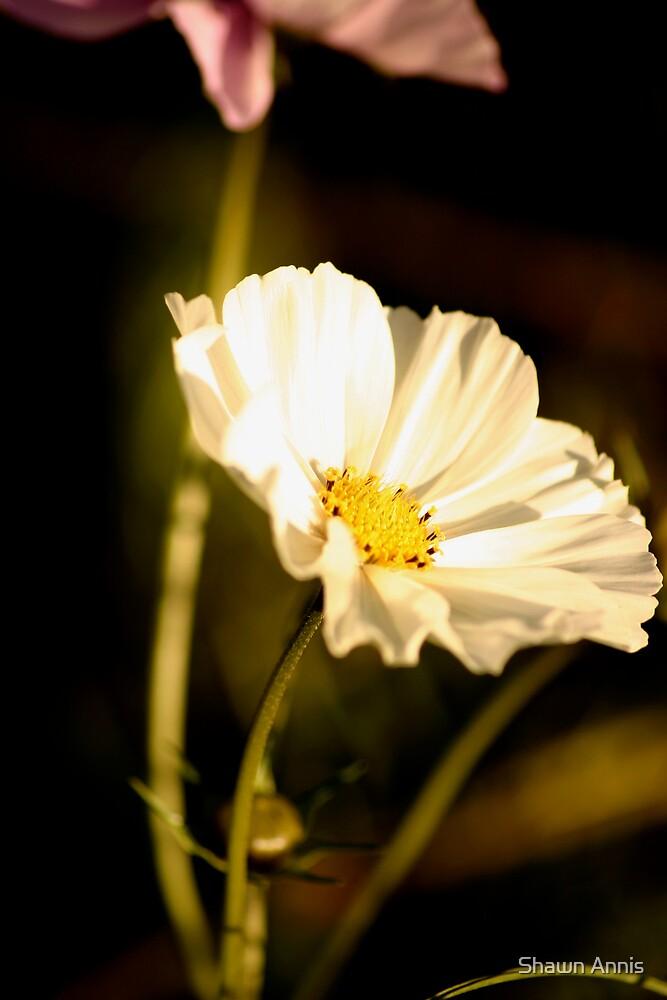 Fleur Lumineuse by Shawn Annis