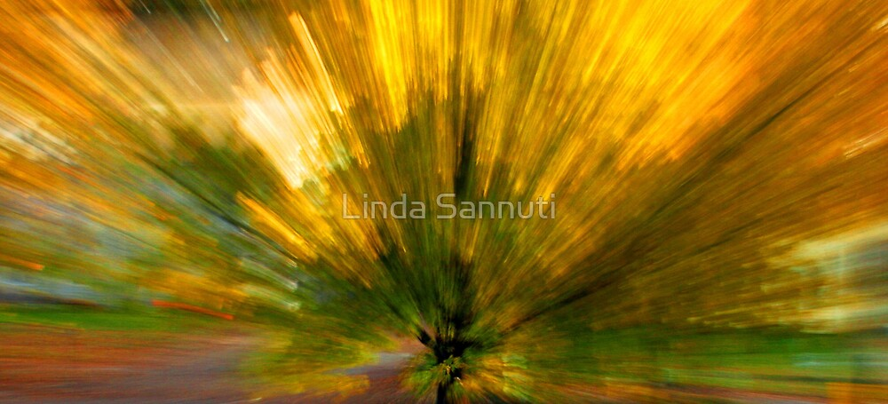 color explosion by Linda Sannuti