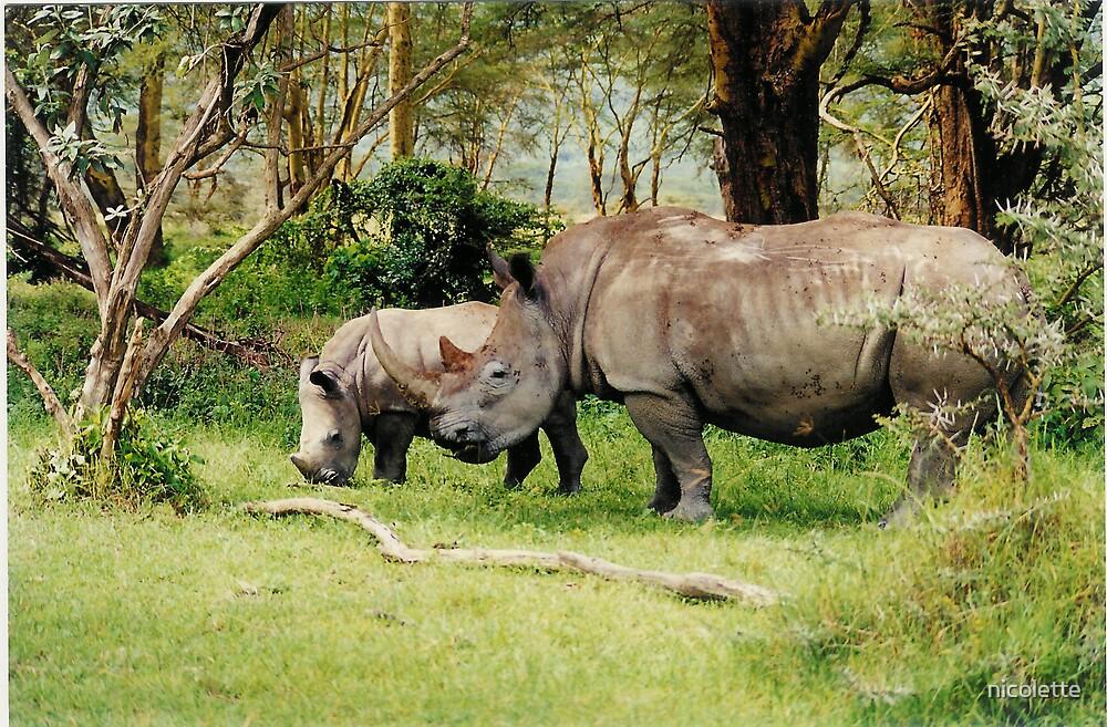 endangered white rhino baby and mother - Nakuru by nicolette
