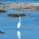 Little White Egret by Coralie Plozza