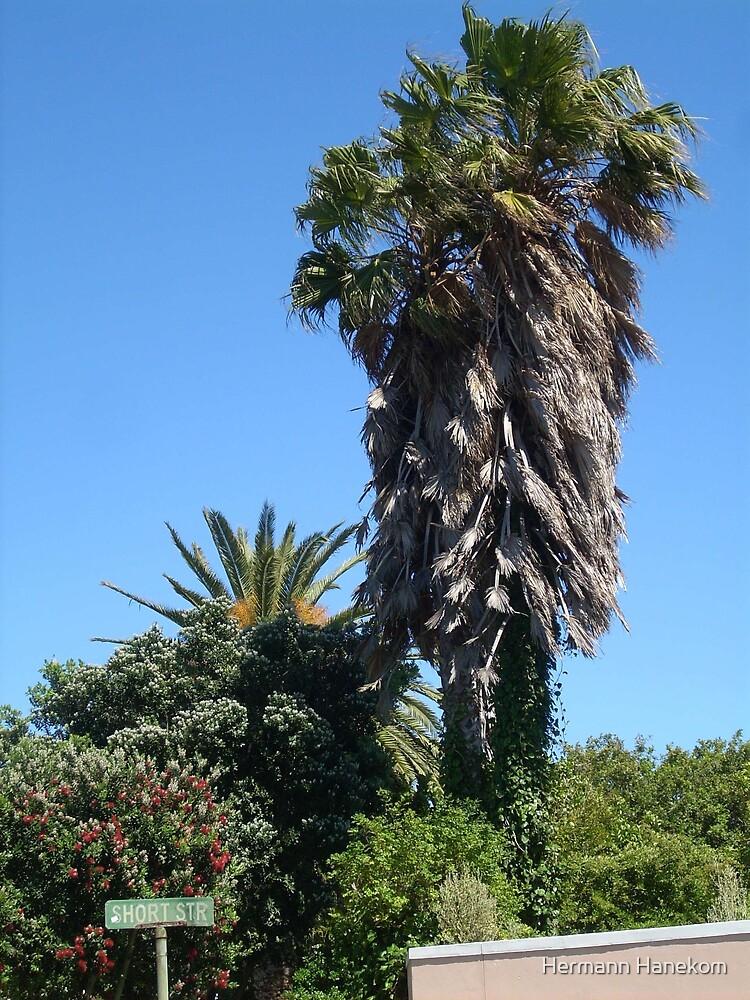 Palm trees and blue sky by Hermann Hanekom