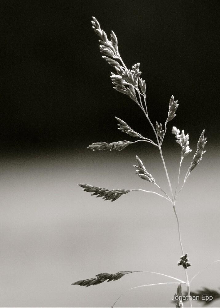 Simplicity by Jonathan Epp
