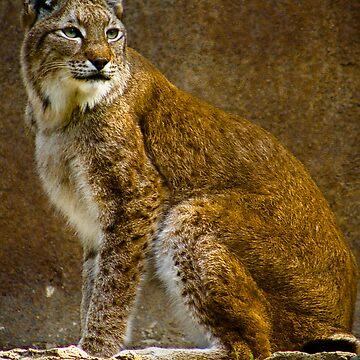 Big Cat by JonathanEpp