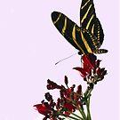 Zebra Beauty II by Lisa Putman