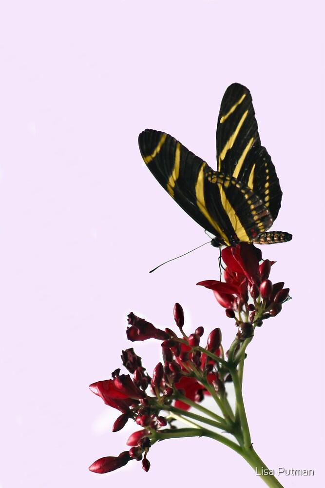 Zebra Beauty I by Lisa Putman