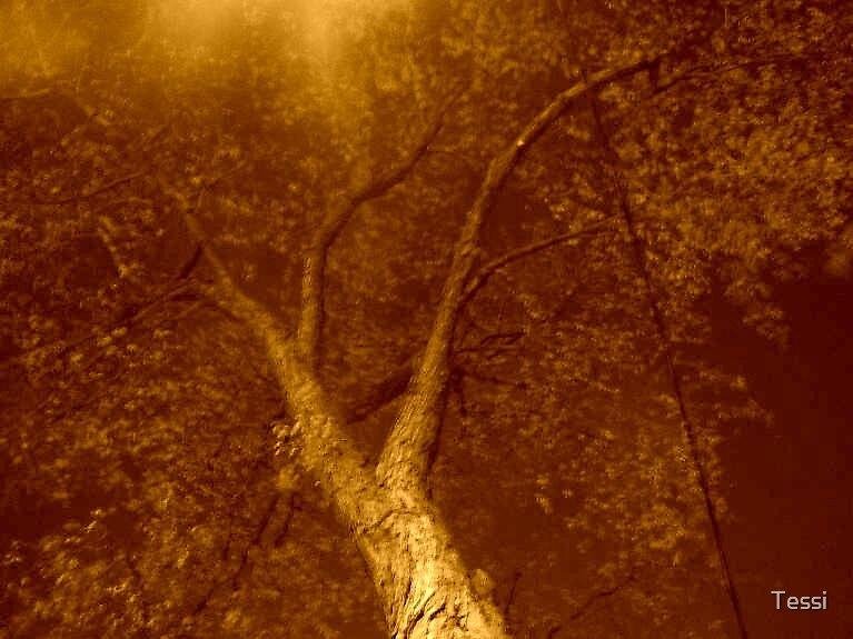 Bronze Bark by Tessi