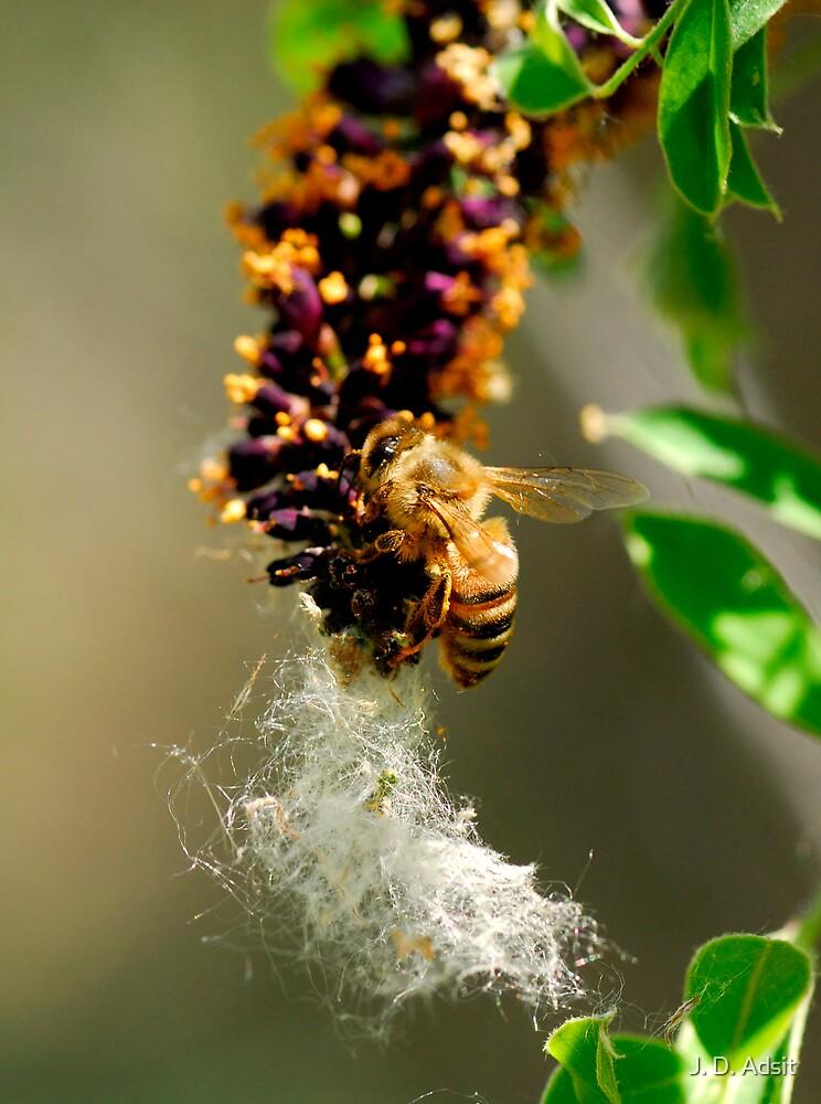 Making Honey by J. D. Adsit