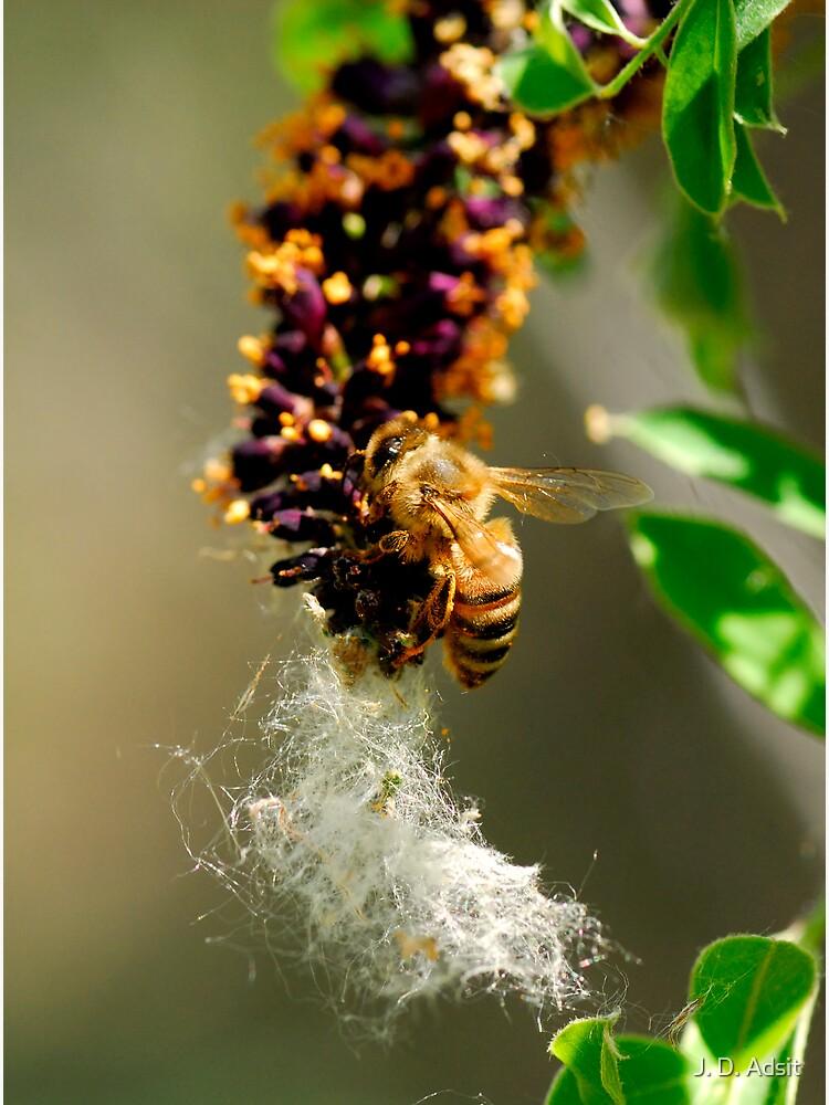 Making Honey by adsitprojectpro