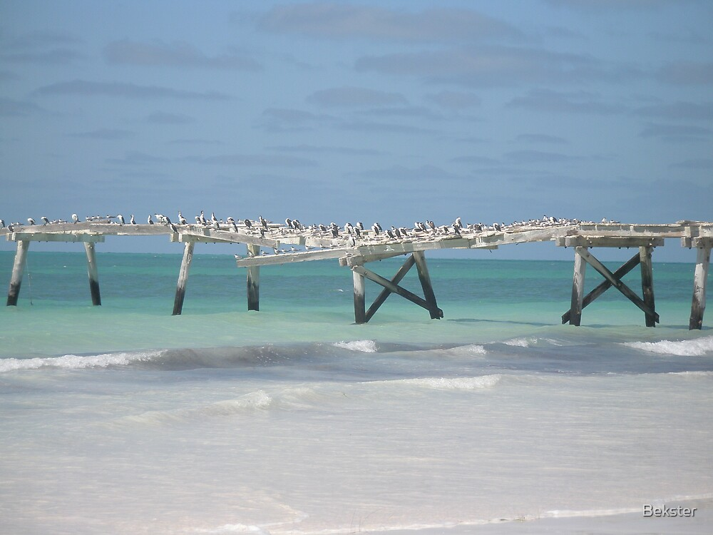 Birds on a Jetty by Bekster
