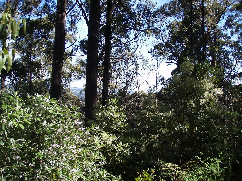 peeking through the bush towards Erriba, Tasmania - (climbing Mt Roland) by gaylene