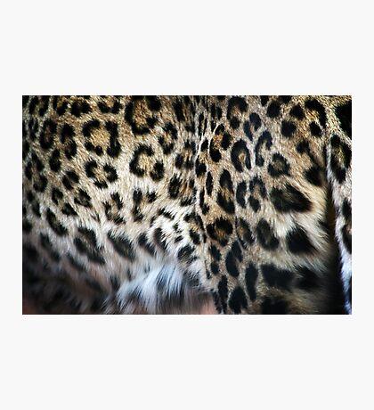 Hide  Photographic Print