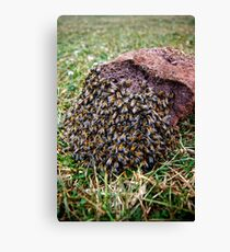 African Bees Canvas Print