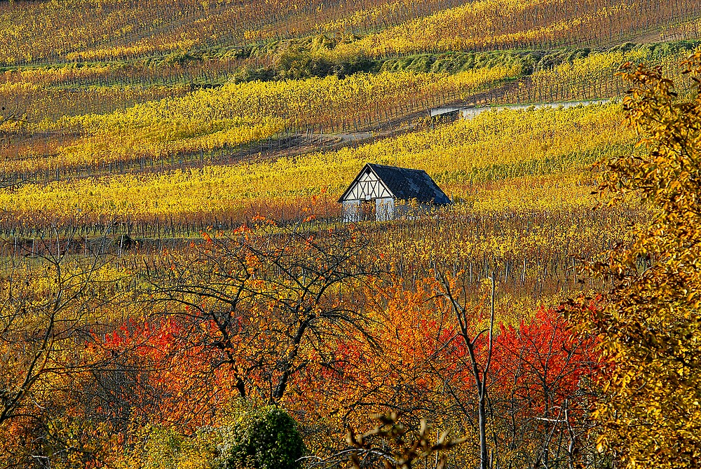 The house of vineyards by Philippe Sainte-Laudy