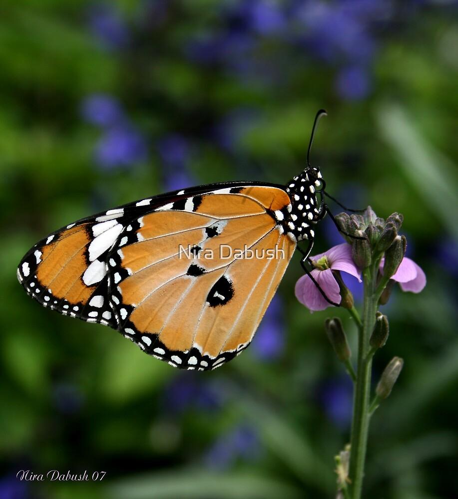 A Butterfly as Part of a Flower... by Nira Dabush