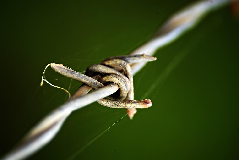 barbed wire by Robert Kiesskalt