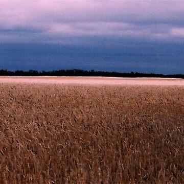 Canadian Wheat Field by kjhart8