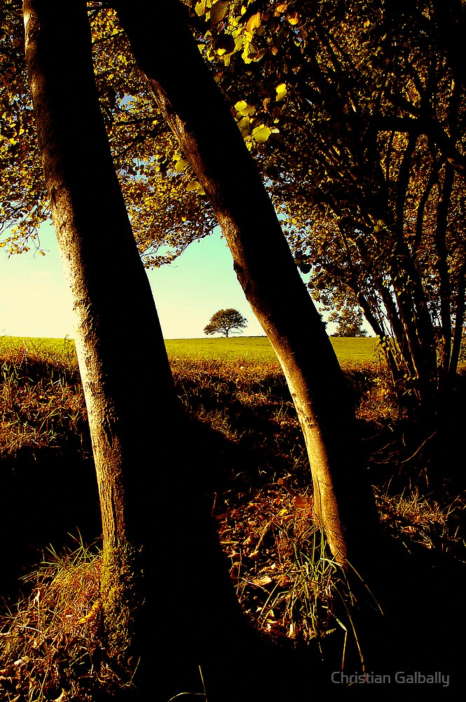 Little tree by Christian Galbally