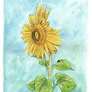 Sunflower from my Garden by Meaghan Roberts