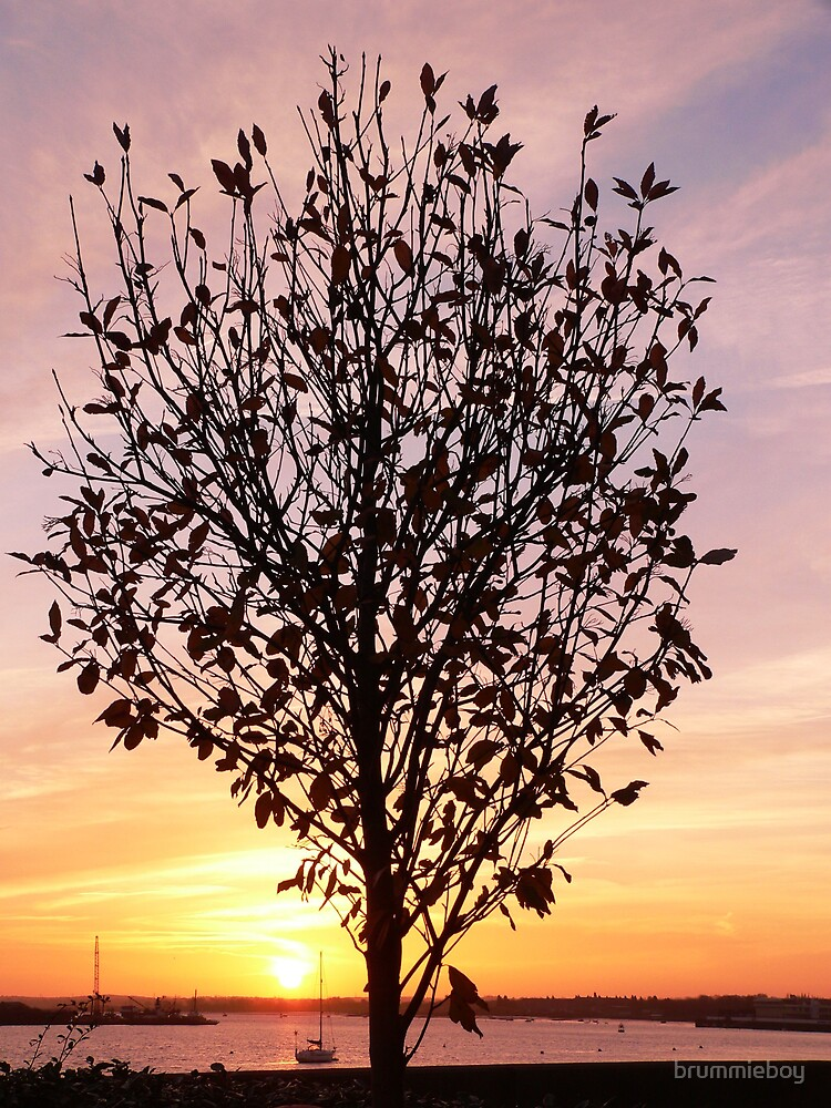The Tree by brummieboy