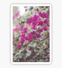Coldplay Life Flower  Sticker