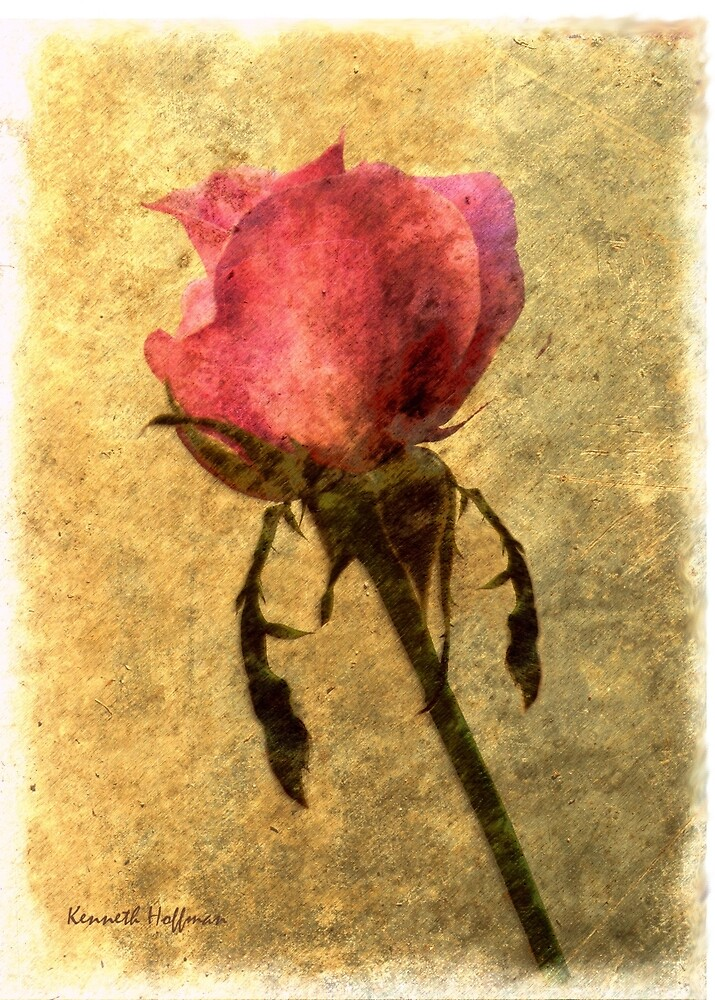 Rose Bud by Kenneth Hoffman