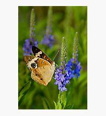 Spring II Photographic Print
