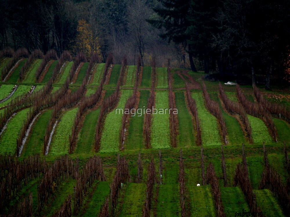 The Vines At Rest by maggiebarra