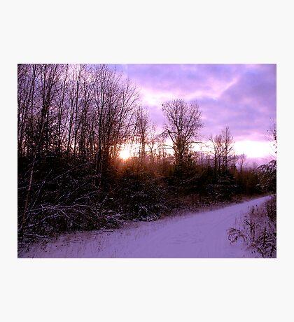 Purple Winter Photographic Print