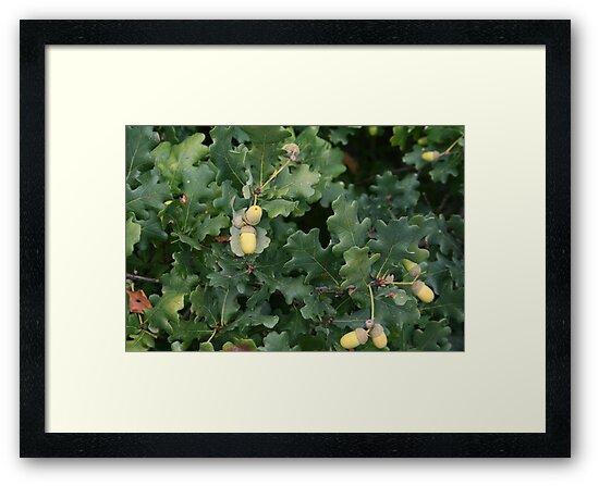 The Mighty Oak by weallareone