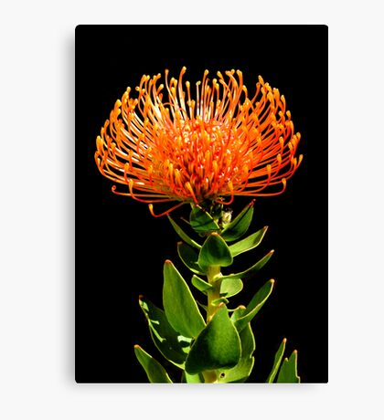 On Fire........... Canvas Print