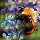 Bumble Bee by saleire