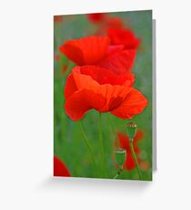 poppy pastels Greeting Card