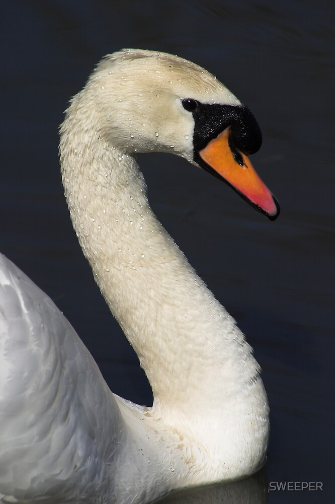 swan 1 by SWEEPER
