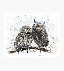 Little owls Photographic Print