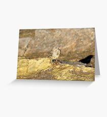 """"""" Rock Pipit Shadow """" Greeting Card"""