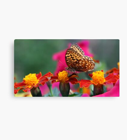 ...But This One Is Just Right Canvas Print