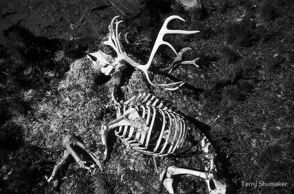 Dry Bones by Terry Shumaker