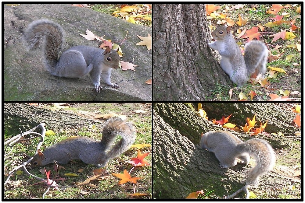 Searching for his nuts by mike1070
