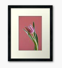 One Pink tulip  Framed Print