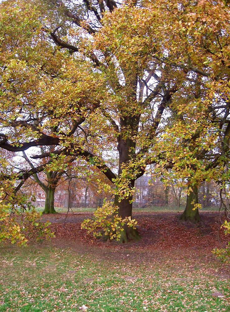Autumn by benni6634