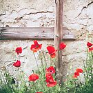 Poppies against wall by Silvia Ganora