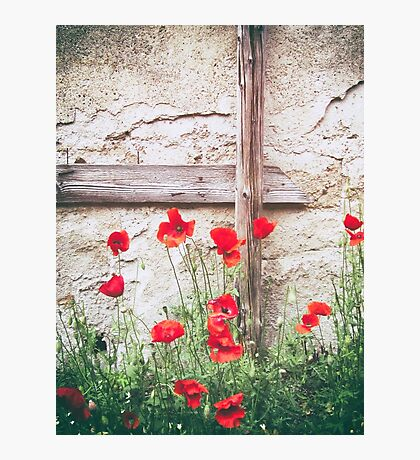 Poppies against wall Photographic Print