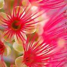 Candy Pink by Lorraine Deroon