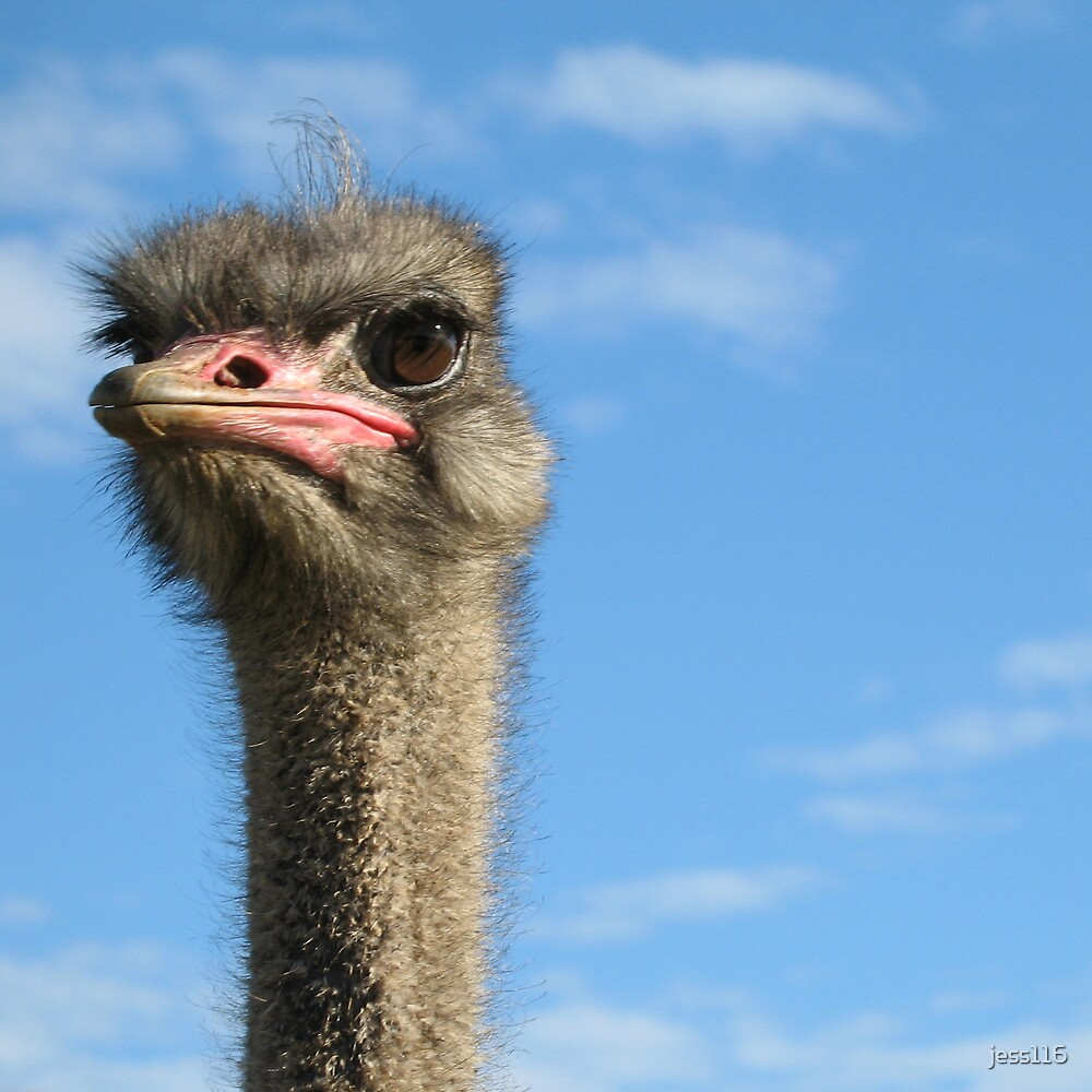 Ostrich by jess116