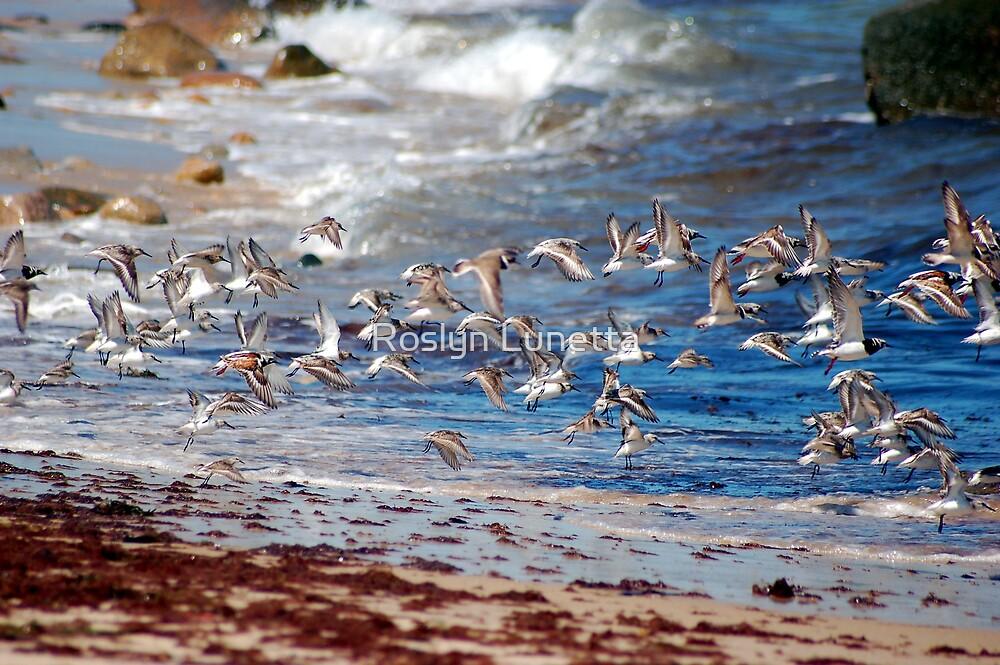 Shore Bird flight by Roslyn Lunetta