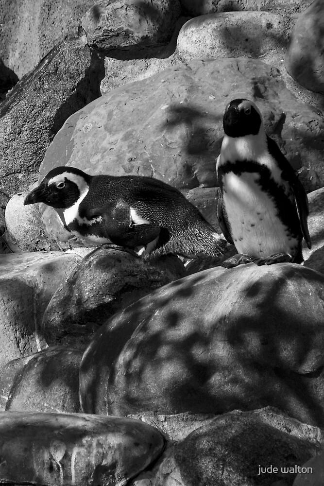 penguin stare by jude walton